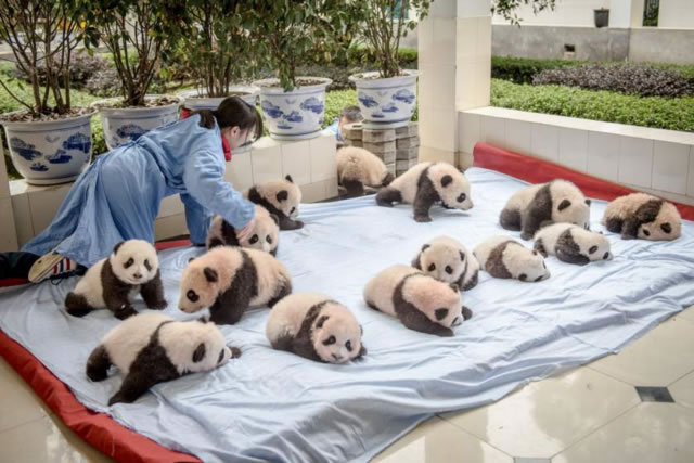 Panda Research Center -  Chengdu, China
